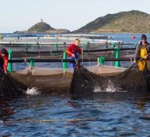 Gloria Maris : L'excellence faite élevage marin